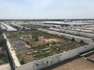 天津市静海にある多興庄園の農園